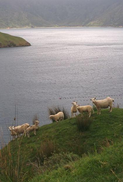 ...shepherds delight.