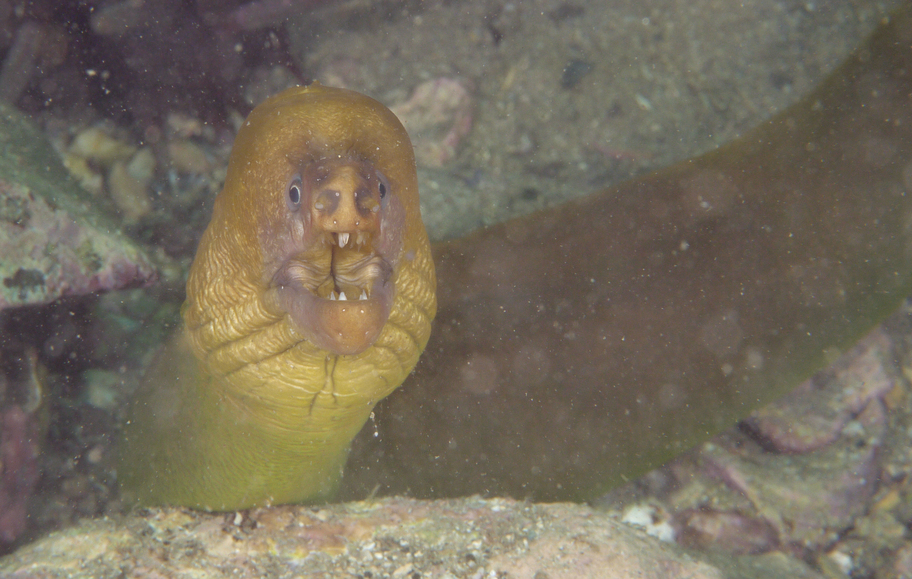 Eel I