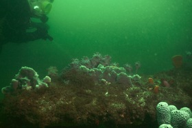 A photo from Boxing Day Dive at Bare Island