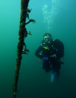 A photo from HMAS Adelaide - Double Boat Dive