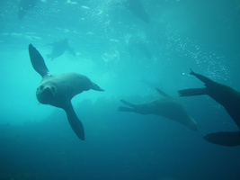 A photo from Narooma (to dive Montague Island)