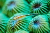 A wee fish