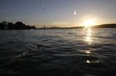 Surfacing at Sunset