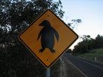 A photo from Tasmania