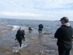 A photo from Bare Island, Queen's Birthday Dip